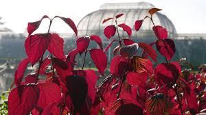 Plan your visit to Kew Gardens   Kew