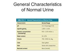 Urine Turbidity Chart Lab 41 Urinalysis Urine 180l Day Filtrate 1 8l Day Urine
