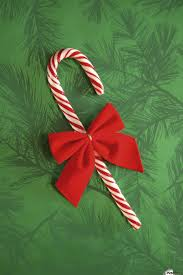 Sara elliott if you've decorated your tree with those sweet hooked candies that look like. Candy Cane Pacificstock