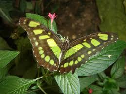 """Résultat de recherche d'images pour """"papillon"""""""