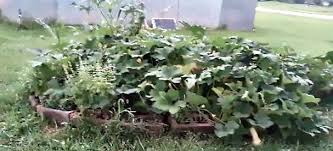 Small Picture How To Design The Perfect Vegetable Garden For Any Space garden