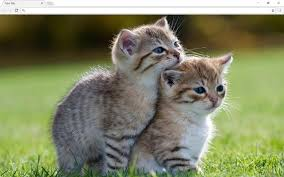 cats and kittens pictures. Contemporary Kittens And Cats Kittens Pictures