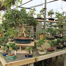 bonsai gardens. indoor bonsai gallery gardens a