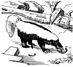 Small Picture Free Skunk Coloring Pages