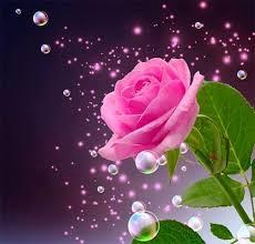 natural beautiful rose flowers
