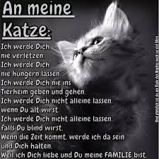 Ich Schwörs Sprüche Katzen Katzen Zitate Und Katzen Fakten