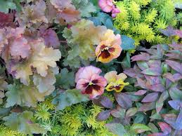 colorful container gardens for chilly weather