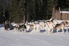 sirius sled dogs aurora tours fairbanks all you need to know before you go with photos tripadvisor
