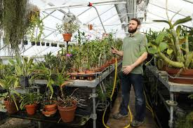 longwood garden horticulturist and orchid grower greg griffis waters orchids in a greenhouse