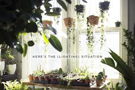Lighting for houseplants Attractive Heres The lighting Situation Stump Plants Heres The lighting Situation Stump