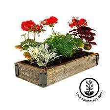 herb kits urban farmer indoor herb garden kit planter designs indoor herb garden kits grow culinary medicinal herbal tea herbs