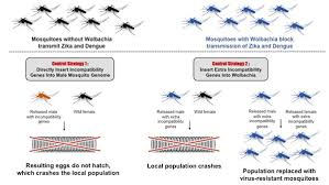 Mosquito Chart New Tool For Combating Mosquito Borne Disease Insect