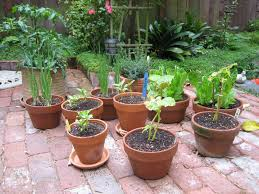 Starting A Potted Vegetable Garden At HomeContainer Garden Ideas Vegetables