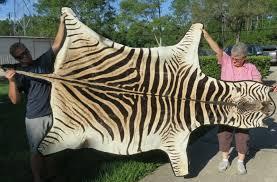 real zebra skin rug roselawnlutheran
