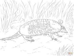 Small Picture Armadillos coloring pages Free Coloring Pages