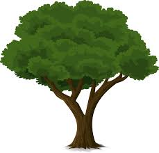 Image result for tree pictures
