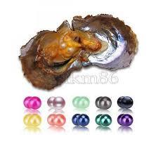 <b>10PCS</b> Natural Akoya Oyster <b>Saltwater</b> Twins Pearls <b>7</b>-<b>8mm Mix</b> ...