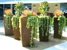 best plants for outdoor pots tall potted trees patio privacy in shade fo