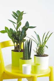 feng shui plants for office. Feng Shui Plants Improve Indoor Air And Create A Comfortable Atmosphere At Home In The Office How Can You Positive Flow Of Energy Your Home? For C