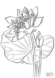 Heilige Lotus Kleurplaat Gratis Kleurplaten Printen