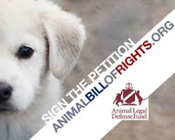 animal legal defense fund winning the case against cruelty sign the animal bill of rights