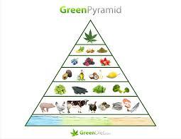 animal food pyramid. Brilliant Food The Green Pyramid And Animal Food A