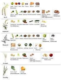 Pollen Food Allergy Chart Oral Allergy Syndrome Foods List Complete With All Pollen