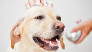 il bagno al cane