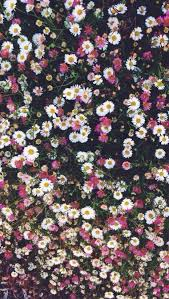 flower phone wallpapers. Simple Wallpapers Iphone Wallpaper On Flower Phone Wallpapers A