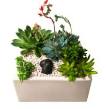 order plants online. Zen Succulents Contemporary Planter Order Plants Online E