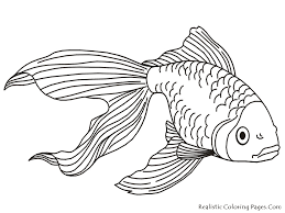 Small Picture Tropical Fish Coloring Page aecostnet aecostnet