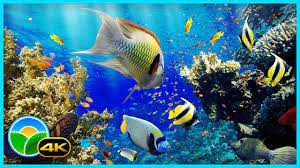 The Best 4K Aquarium for Relaxation II ...