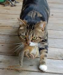 best food for diabetic cat. I Have Recently Read More And Information About Feeding Diabetic Cats A Canned Food That Contains Low Carbohydrate Content. Best For Cat