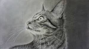 realistic cat drawing in pencil. Contemporary Pencil How To Draw A Realistic Cat With Pencil Step By Intended Drawing In R