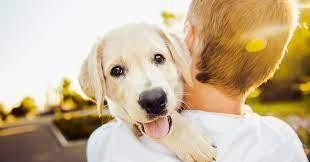 ペット 保険 口コミ