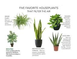 Let's Breathe Fresh Air: Indoor Air Purifying Plants in Gurgaon!