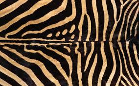 Pink Zebra Print Wallpaper For Bedroom
