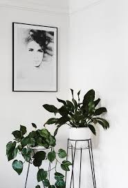 best low light office plants. Best Office Plants Ideas On Pinterest Indoor Inside And Low Light Plant Decor In Home G