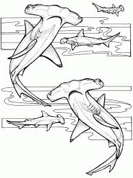 Small Picture Coloring Pages Animal Coloring Pages Of Ocean Animals Coloring
