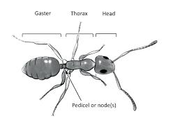 black ants bite get rid of ants in bathroom small black ants in kitchen black ant