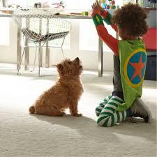 carpet padding lowes. stainmaster petprotect carpet padding lowes t