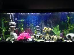 fish tank lighting ideas. Fish Tank Lighting Ideas Planted Aquarium 10 Fresh Used Tanks For Sale Near Me