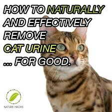 how to stop cat from ing on carpet cat urine hardwood floor cleaning cat out of rid of cat urine odor how to get rid of cat on to get