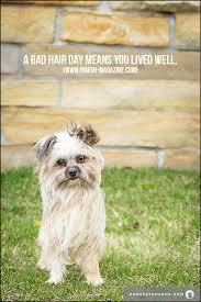 Dog Quotes Inspirational Awesome TORONTO DOG PHOTOGRAPHER INSPIRING DOG QUOTES Pawsh Magazine