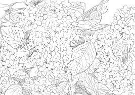 紫陽花アジサイのペン描き風の線画素材です イラスト素材のお
