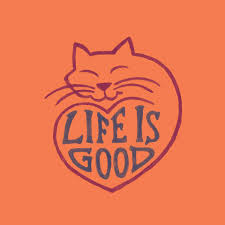Image result for life is good cat