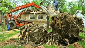 how much does tree removal cost tree cutting prices c53