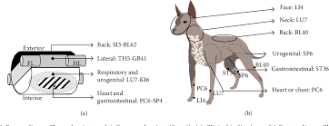 Canine Acupuncture Meridian Chart Figure 2 From Simple Acupoints Prescription Flow Chart Based