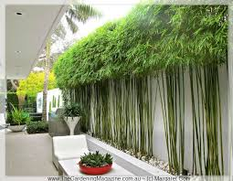 The Gardening Magazine  Blog Archive Hidden Festival Outdoor Design  The  Gardening Magazine ~ Love this idea for bamboo! | The Great Outdoors |  Pinterest ...