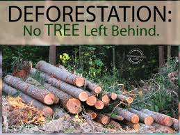 deforestation slogans deforestation no tree left behind
